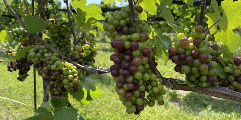 Pinot Noir 2021